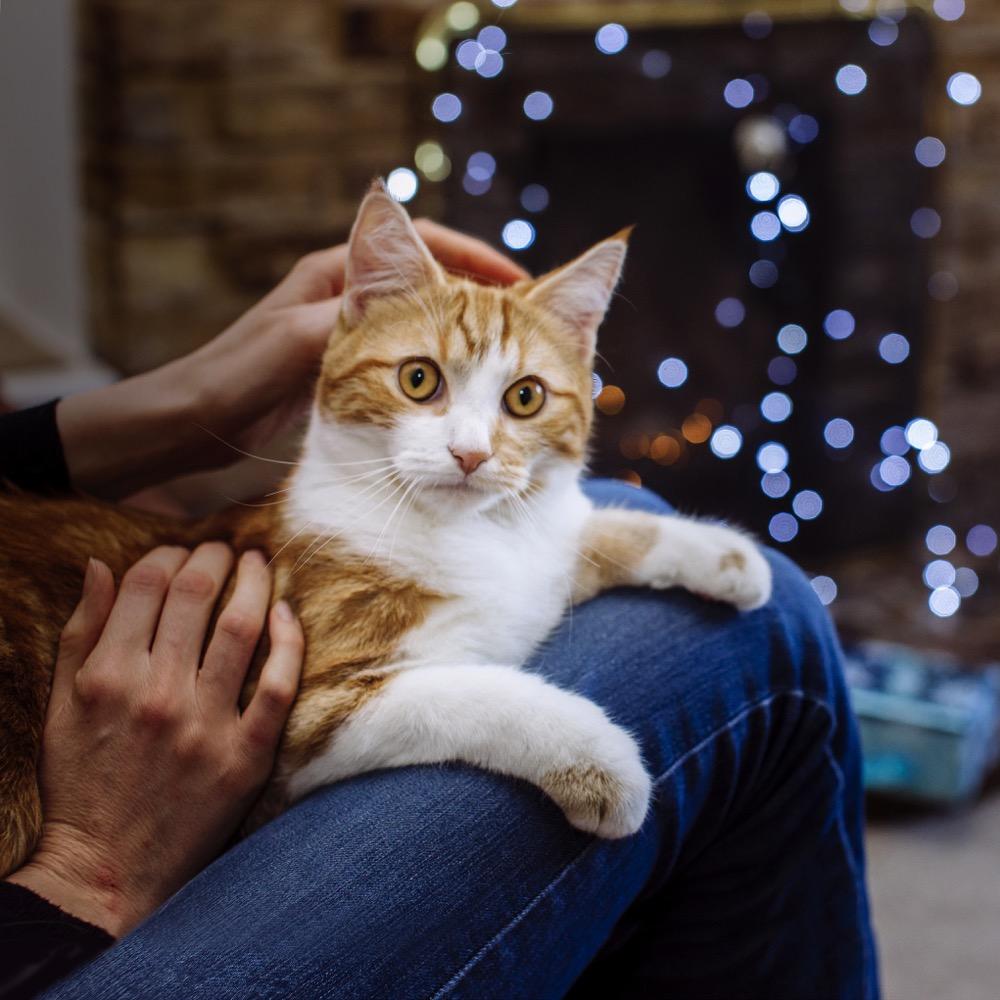 Thomas's First Christmas